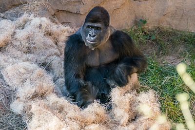 Houston Zoo 12-21-16
