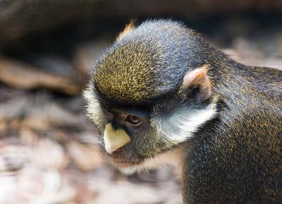 Houston Zoo 2009-0115