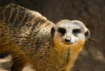 Houston Zoo 2009-0019