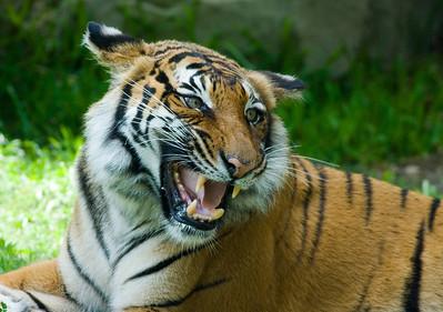 Houston Zoo 2009-0138