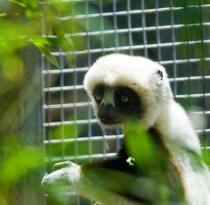 Houston Zoo 2009-0057