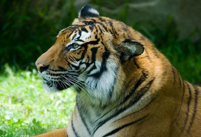 Houston Zoo 2009-0146