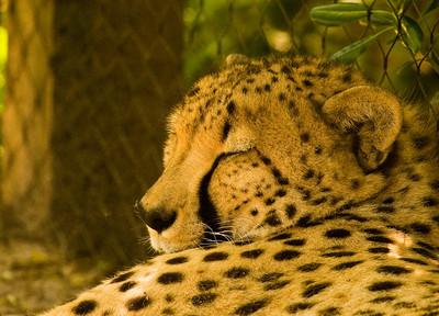 Houston Zoo 2009-0032