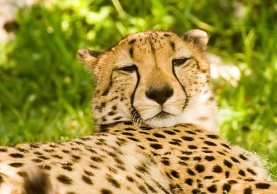 Houston Zoo 2009-0024