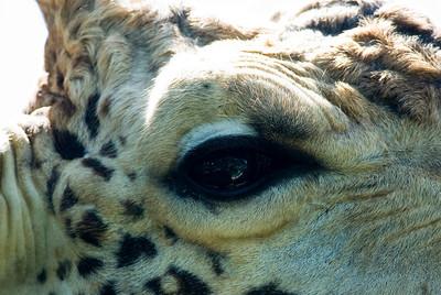 Houston Zoo 2009-0034