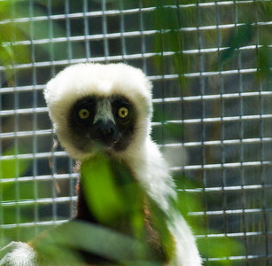 Houston Zoo 2009-0058
