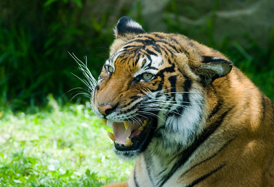 Houston Zoo 2009-0136