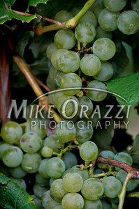 Grapes at Lawrence Farms Orchards in New York.