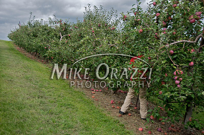 Lawrence Farms Orchards in New York.