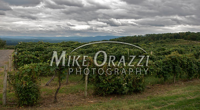 Lawrence Farms Orchards in New York with a view of the Hudson River Valley in the distance. Kind of a moody sky today. Seems to be the norm for my days off this year.