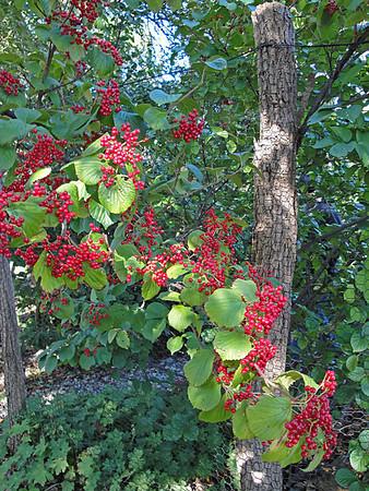 Hudson Valley's Brine Garden