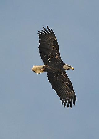 Hudson Valley Eagles