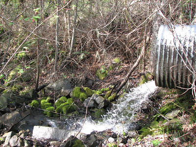 culvert tributary