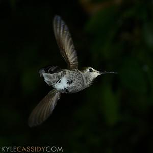 hummingbeasts-2013