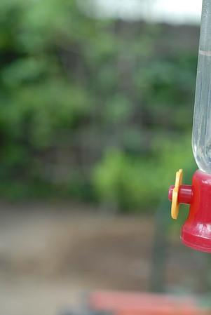 Hummingbird Exercise