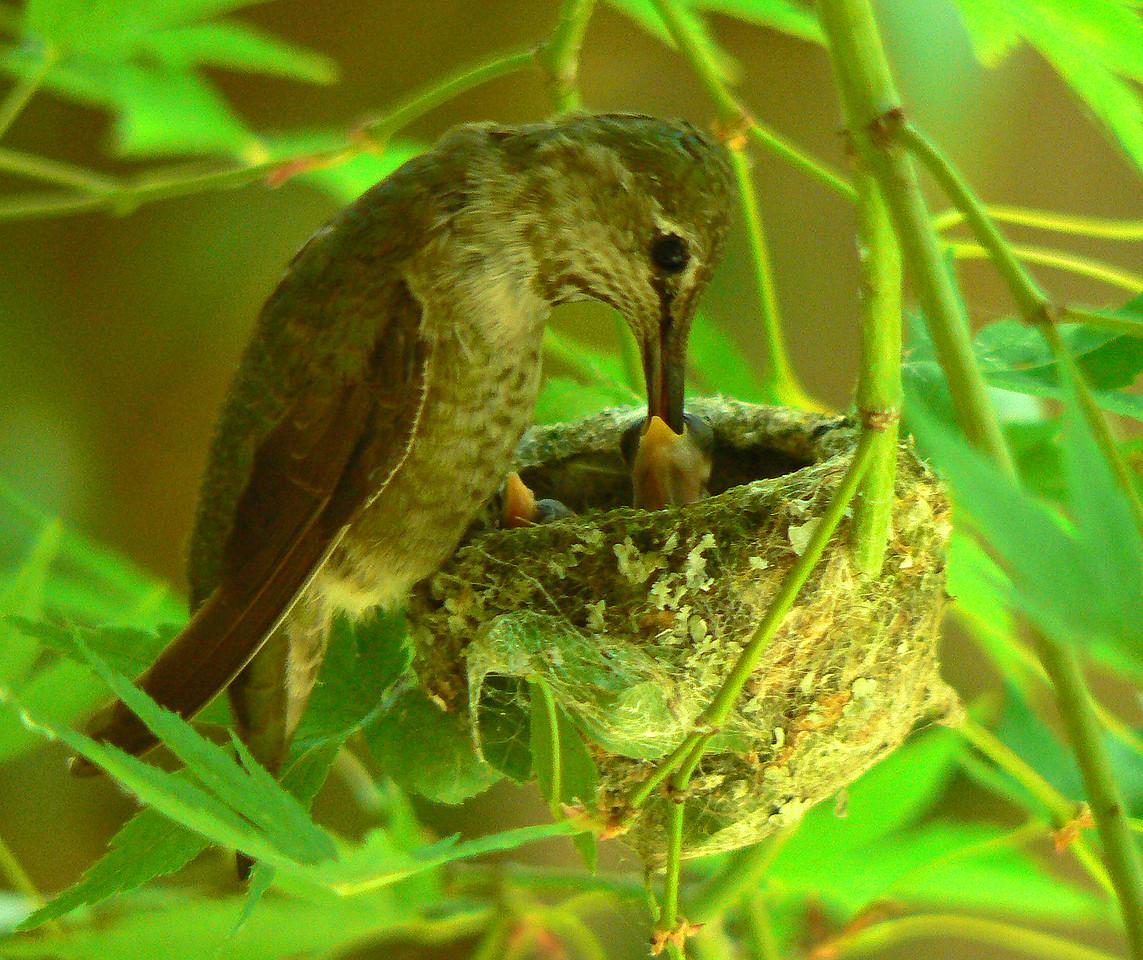 Feeding time 2