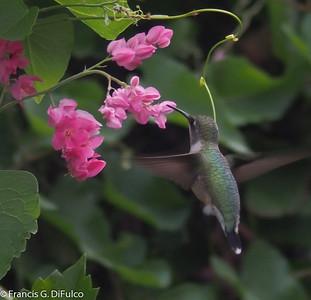 Hummingbird October 2013