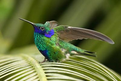 hummingbird & butterfly