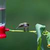 Sometimes the Hummingbirds do not follow the script.