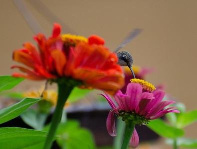 FlowersAug-24
