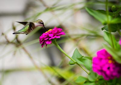 FlowersAug-31