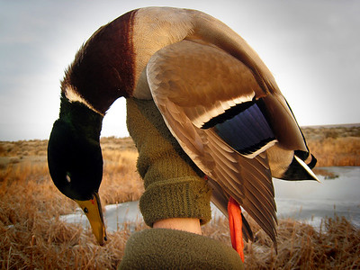 Duck hunting in the Columbia Basin