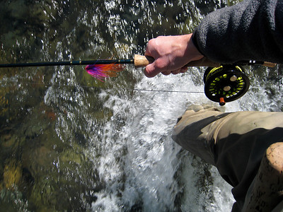 In Pursuit of the Steelhead