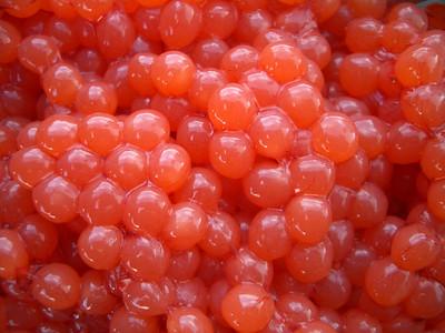 Chinook Salmon eggs - Alaska