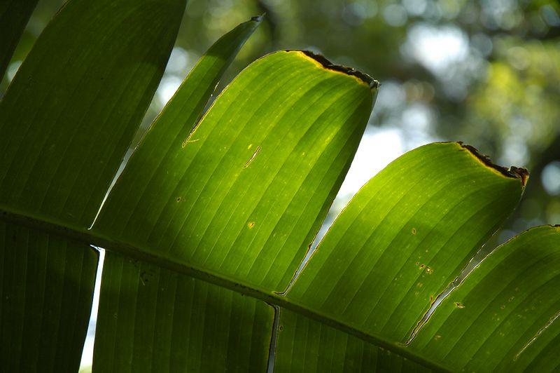 In the subtropical garden