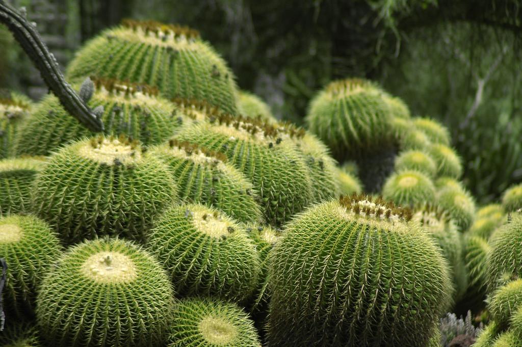 Short, fat cactus