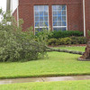 Trees down in our subdivision
