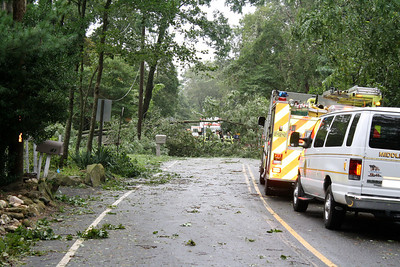 Tree Down in Middle island, N.Y. after Hurricane Irene