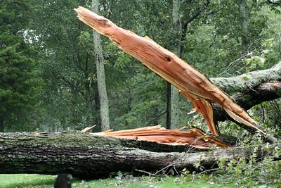 """""""Open Wide"""" Hurricane Irene was here!"""