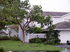 My neighborhood . . . the day after . . . Friday, August 26, 2005