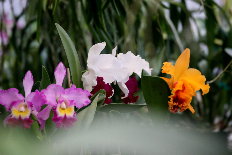 Part of Raymond Burr's Orchid collection