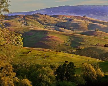 Composit-horses-hills