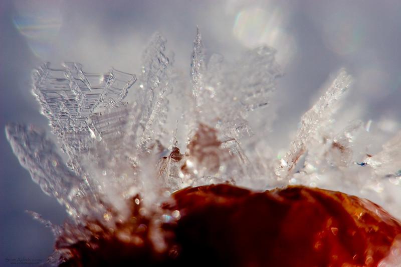 Ice crystals on frozen flower buds.