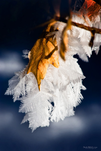 Hoar frost on leaves.