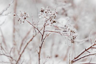 20210214-Ice_Storm-003