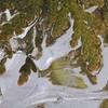 Frozen Cedar- Cascade River