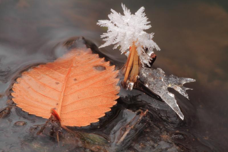 Autumn into winter- Elk River