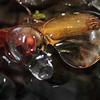 Ice droplets- Elk River