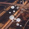Trapped bubbles- Crex Meadows WMA