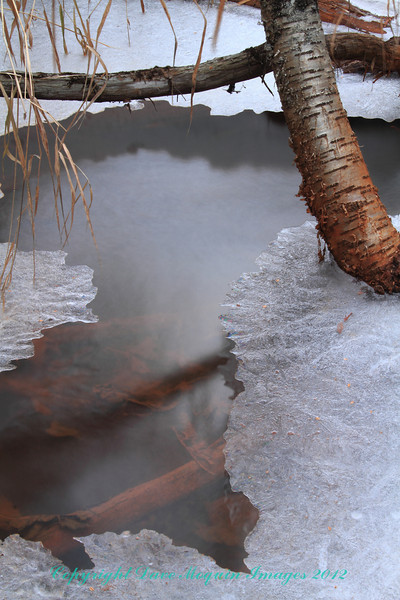 Water, Ice, and Bark- Cedar Interpretive Trail