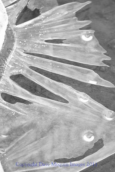 Ice formation on Mississippi River(monochrome)
