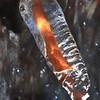 Ice encased twig- Paint Mine Creek