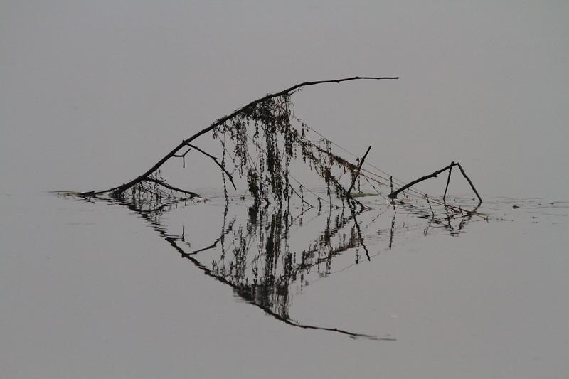 Fish likeness debris in water- Lake Orono