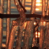 Icicles at sunset- Lake Fremont
