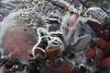 Ice encased rocks- Gooseberry Falls S.P.