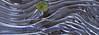 Patterns in Ice #3- Cedar Interpretive Trail